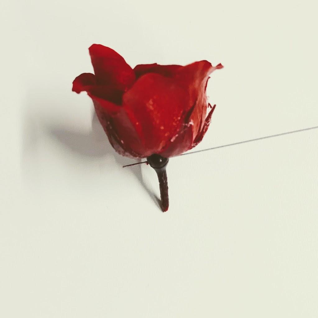 f:id:asunaro-flower:20200615012733j:plain