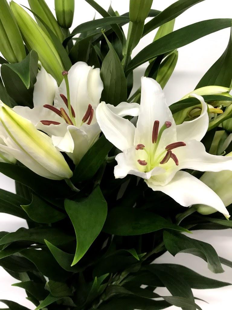 f:id:asunaro-flower:20200615013828j:plain