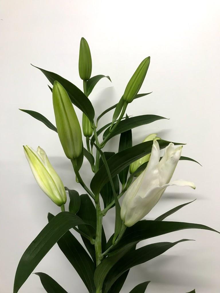f:id:asunaro-flower:20200615013844j:plain