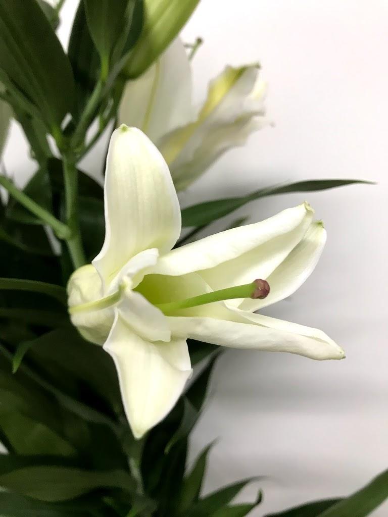 f:id:asunaro-flower:20200615013940j:plain
