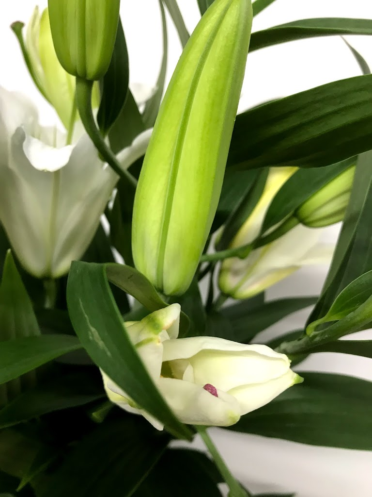 f:id:asunaro-flower:20200615014015j:plain