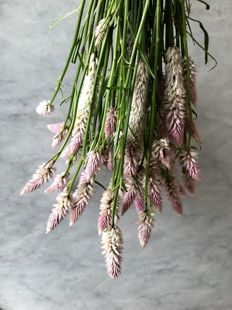 f:id:asunaro-flower:20200615014224j:plain