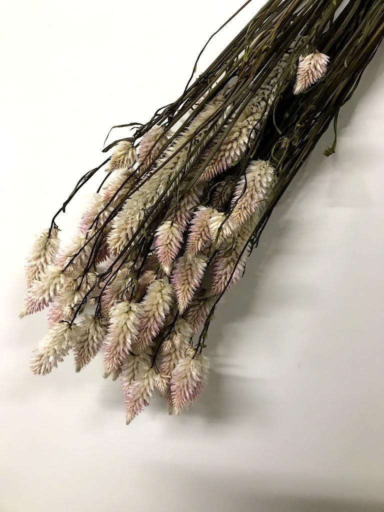 f:id:asunaro-flower:20200615014310j:plain