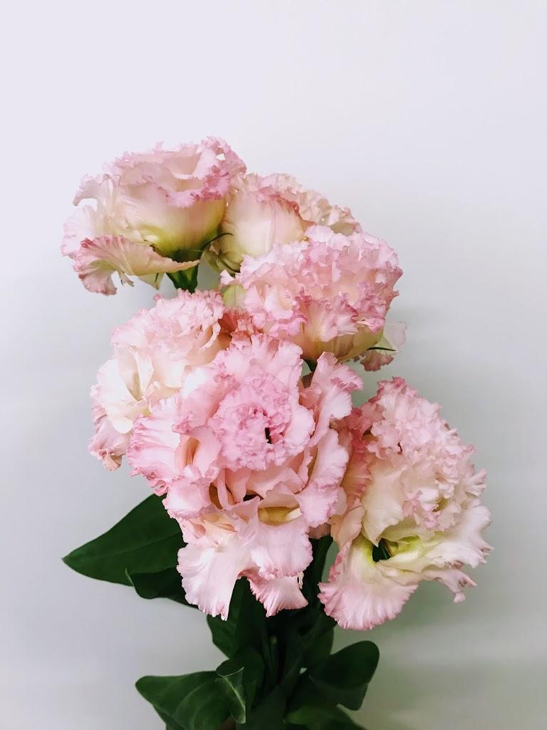 f:id:asunaro-flower:20200615014502j:plain