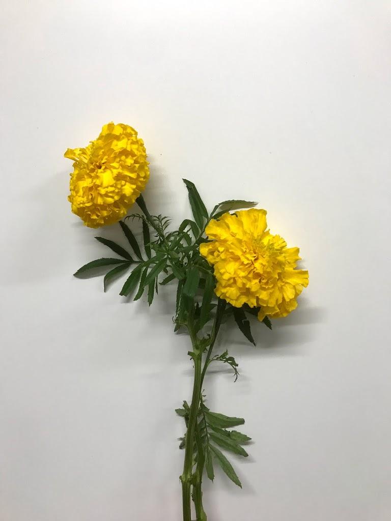 f:id:asunaro-flower:20200615014721j:plain