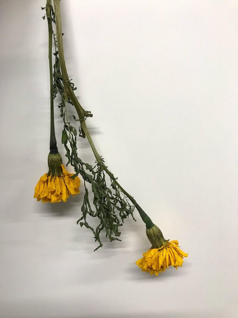 f:id:asunaro-flower:20200615014756j:plain