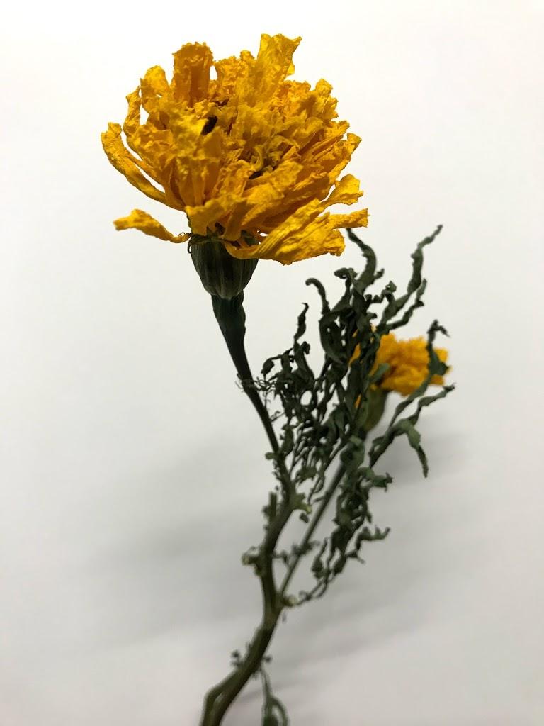 f:id:asunaro-flower:20200615014810j:plain