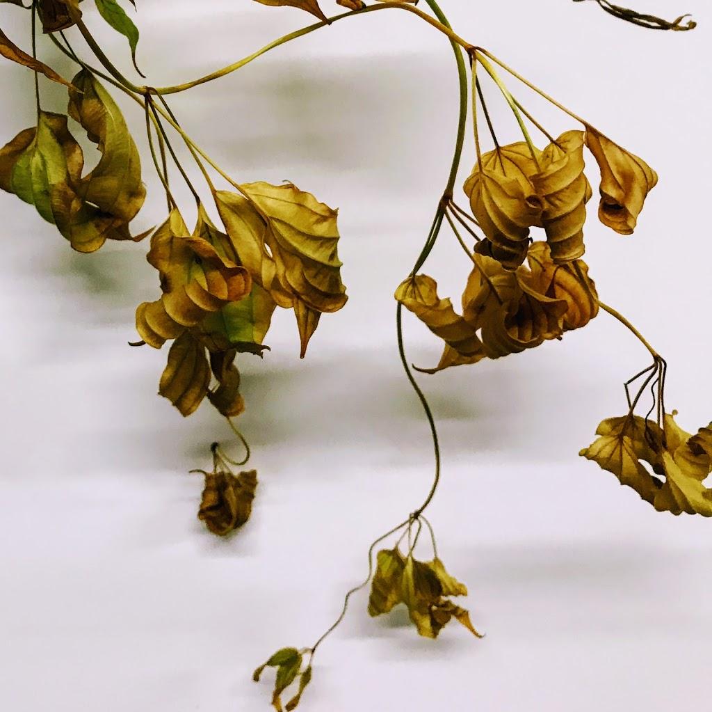 f:id:asunaro-flower:20200615015444j:plain