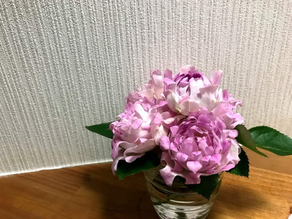 f:id:asunaro-flower:20200615015747j:plain