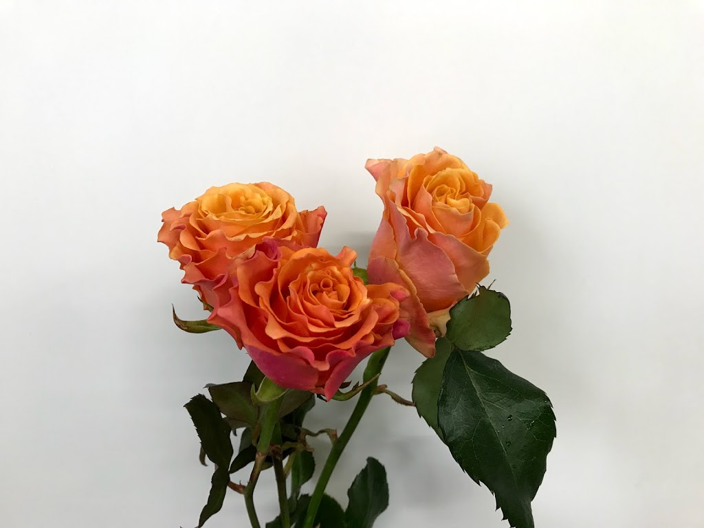 f:id:asunaro-flower:20200615015830j:plain