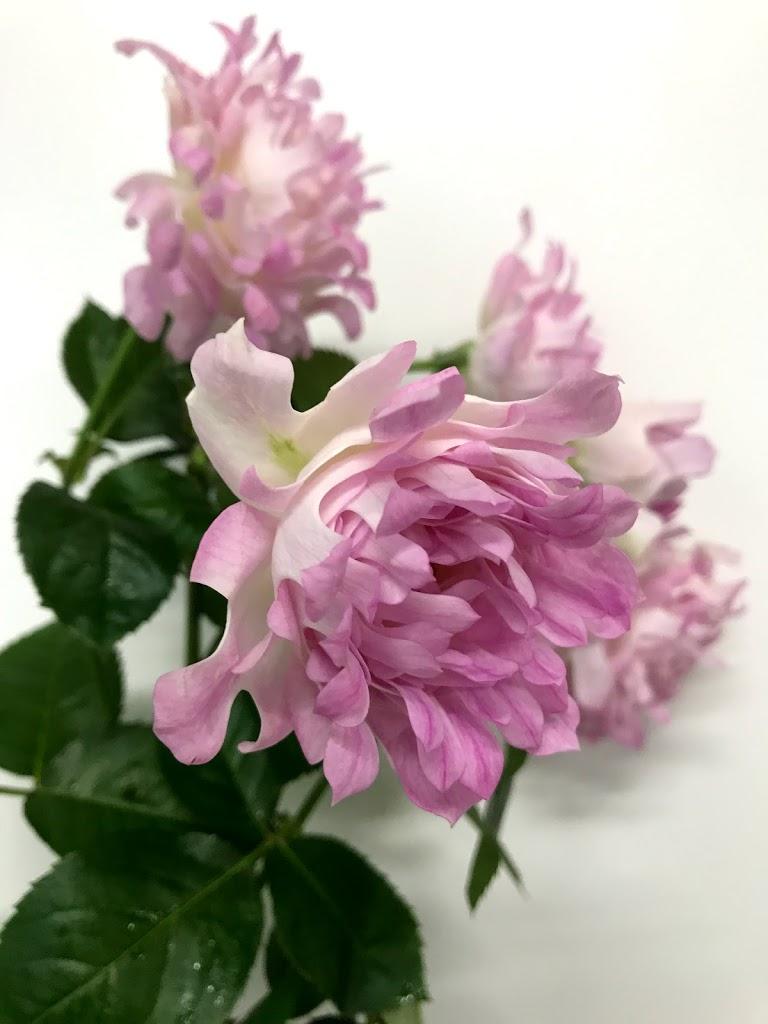 f:id:asunaro-flower:20200615015841j:plain