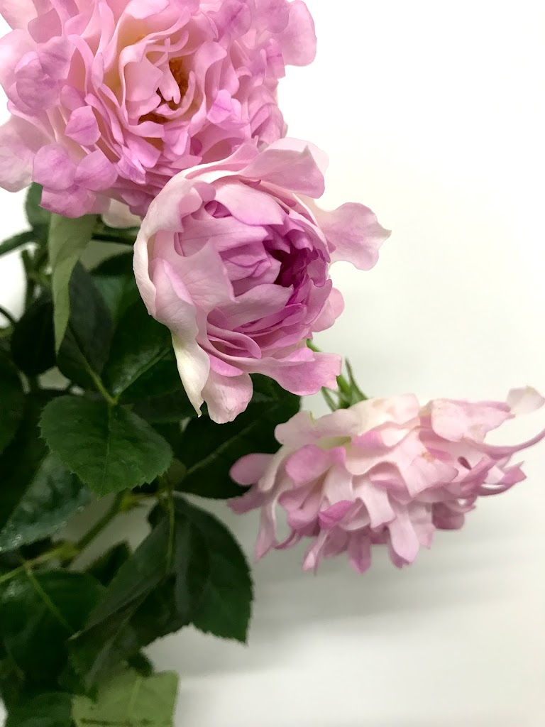 f:id:asunaro-flower:20200615015907j:plain