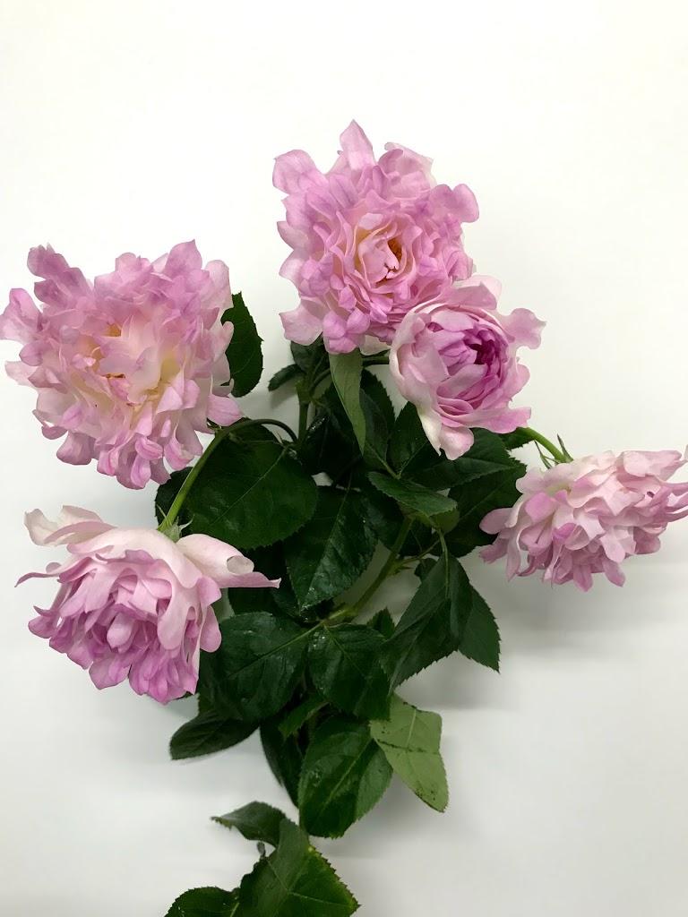 f:id:asunaro-flower:20200615015919j:plain