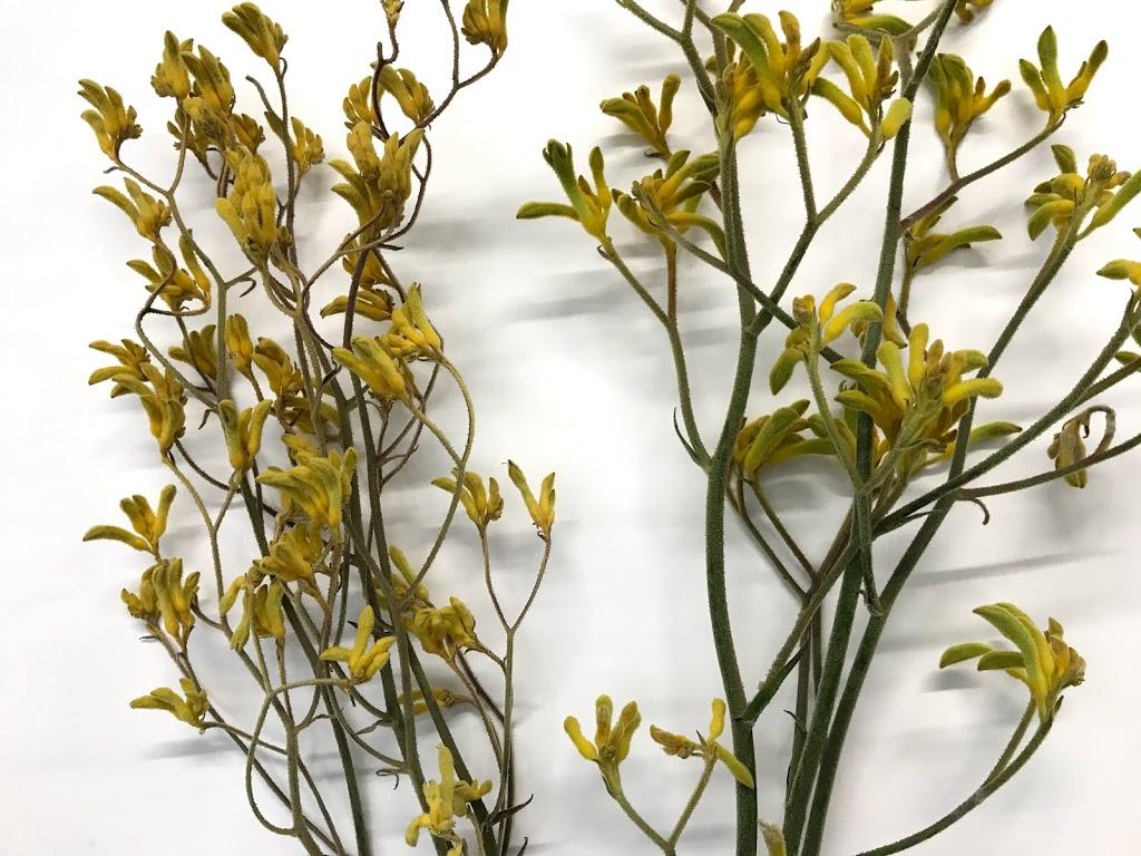 f:id:asunaro-flower:20200615020110j:plain