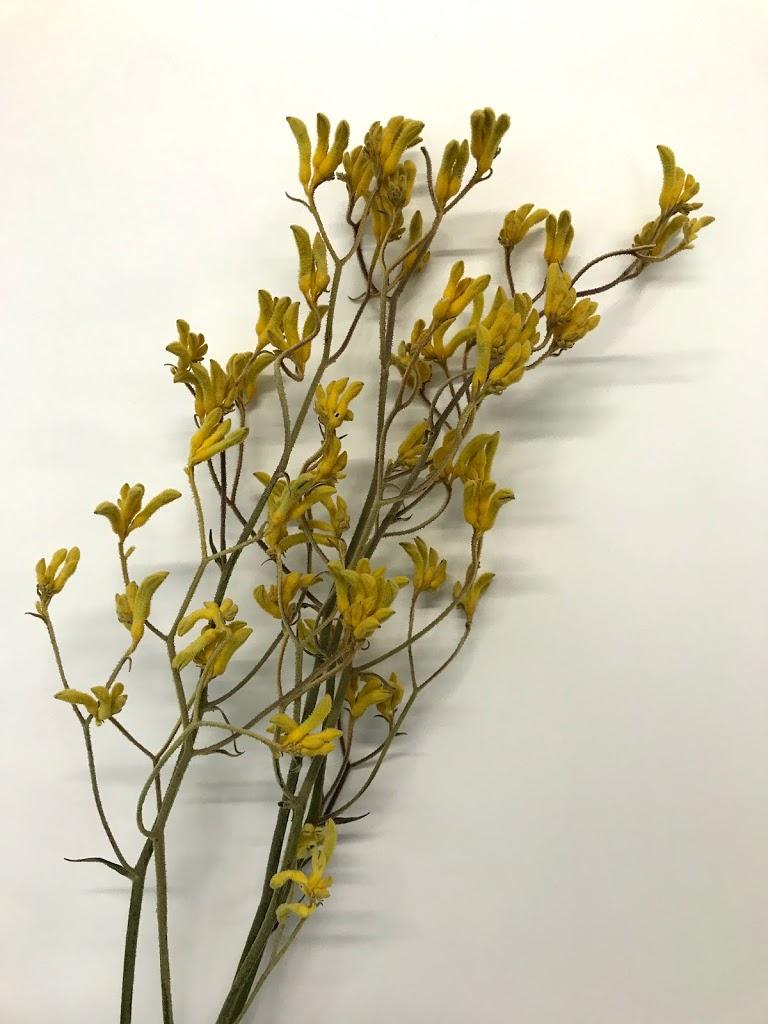 f:id:asunaro-flower:20200615020127j:plain