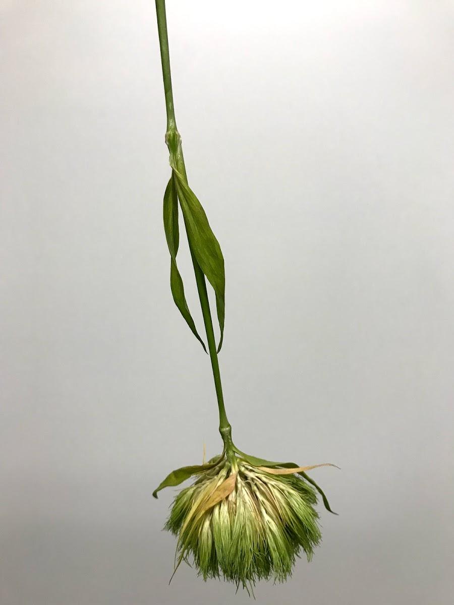 f:id:asunaro-flower:20200615021809j:plain