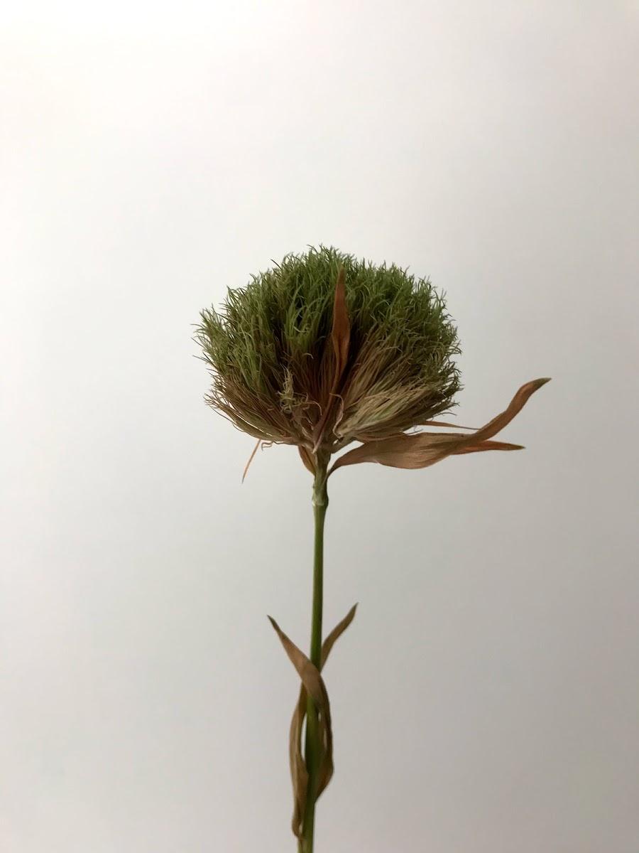 f:id:asunaro-flower:20200615021822j:plain