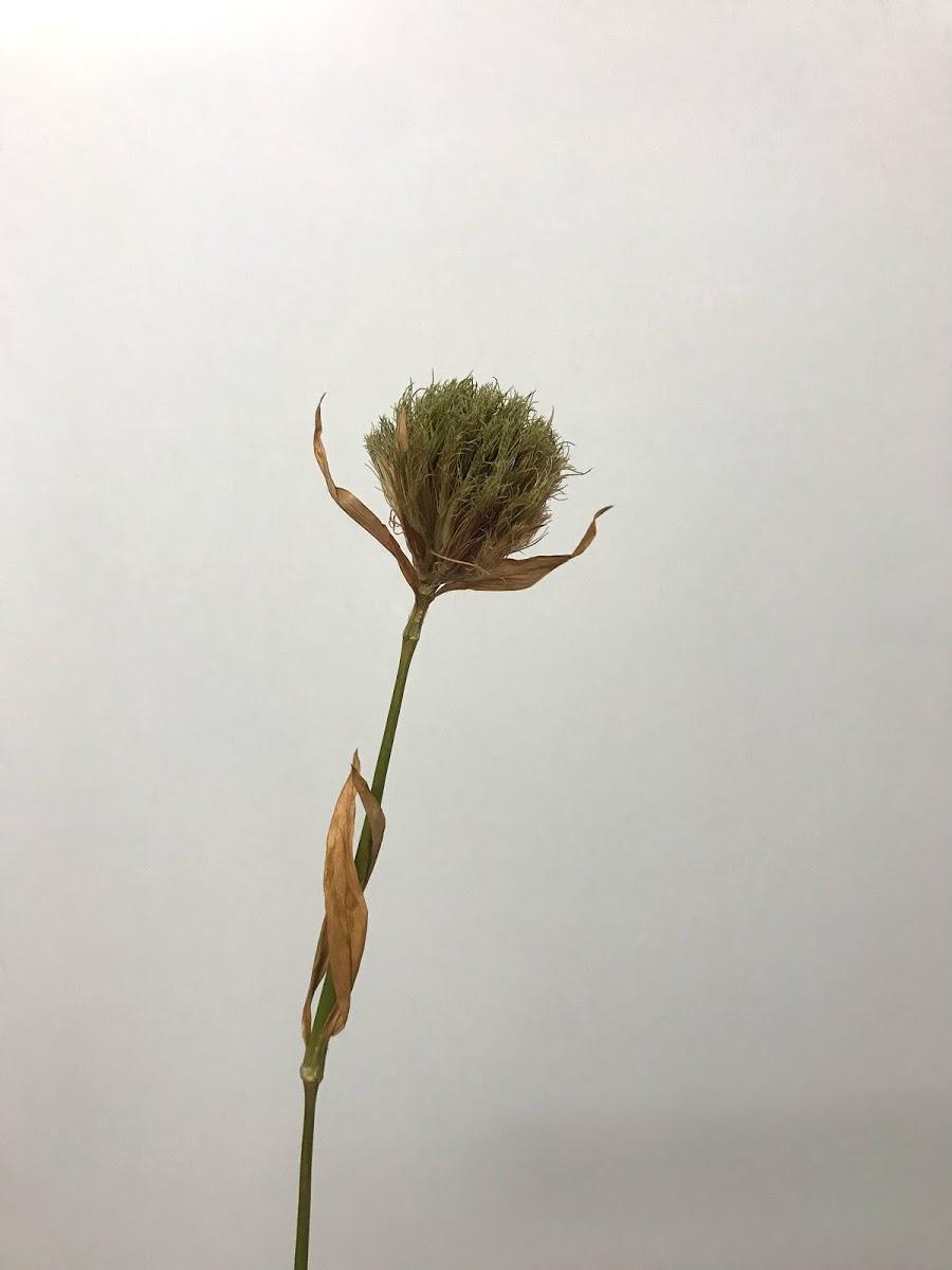 f:id:asunaro-flower:20200615021834j:plain