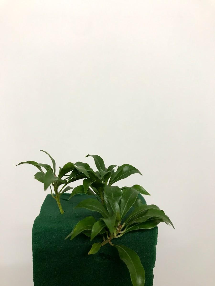 f:id:asunaro-flower:20200615022309j:plain