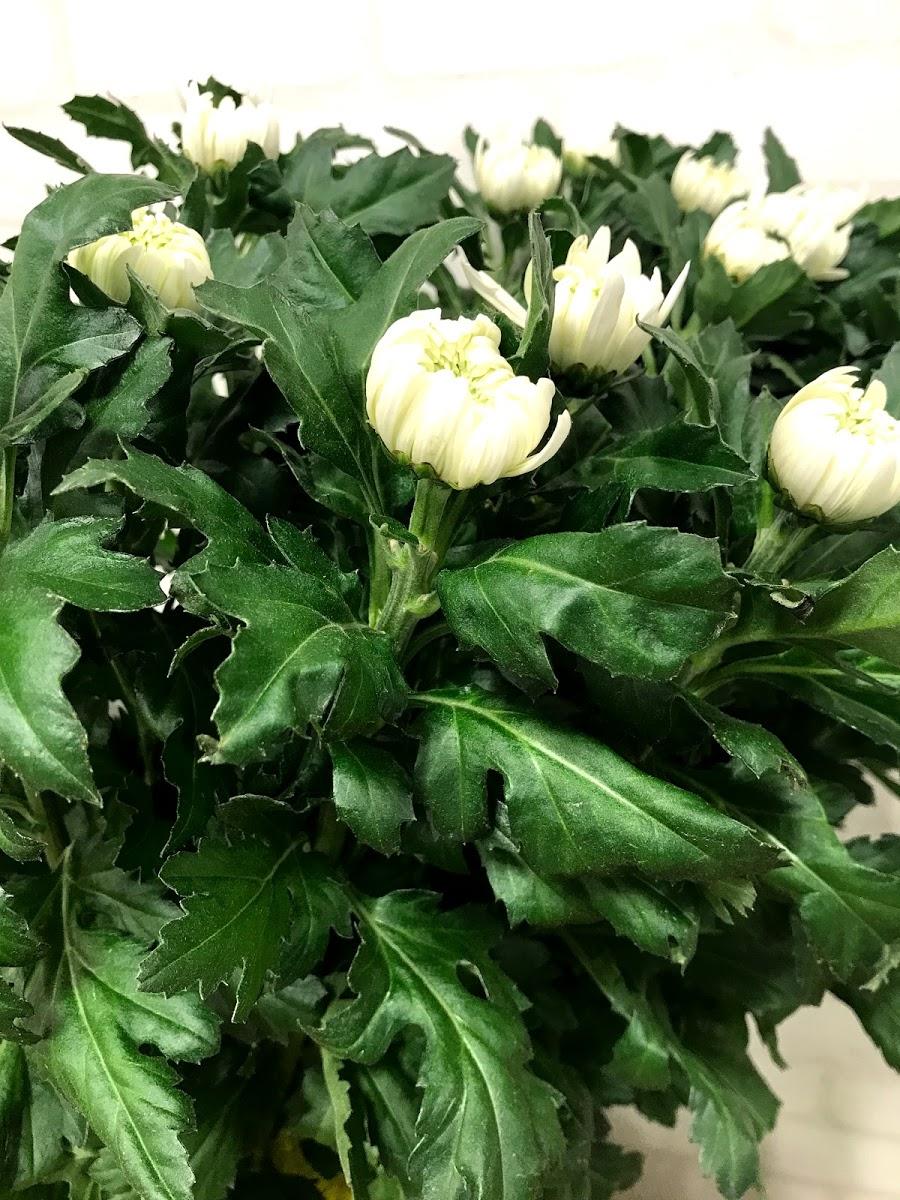 f:id:asunaro-flower:20200615022700j:plain