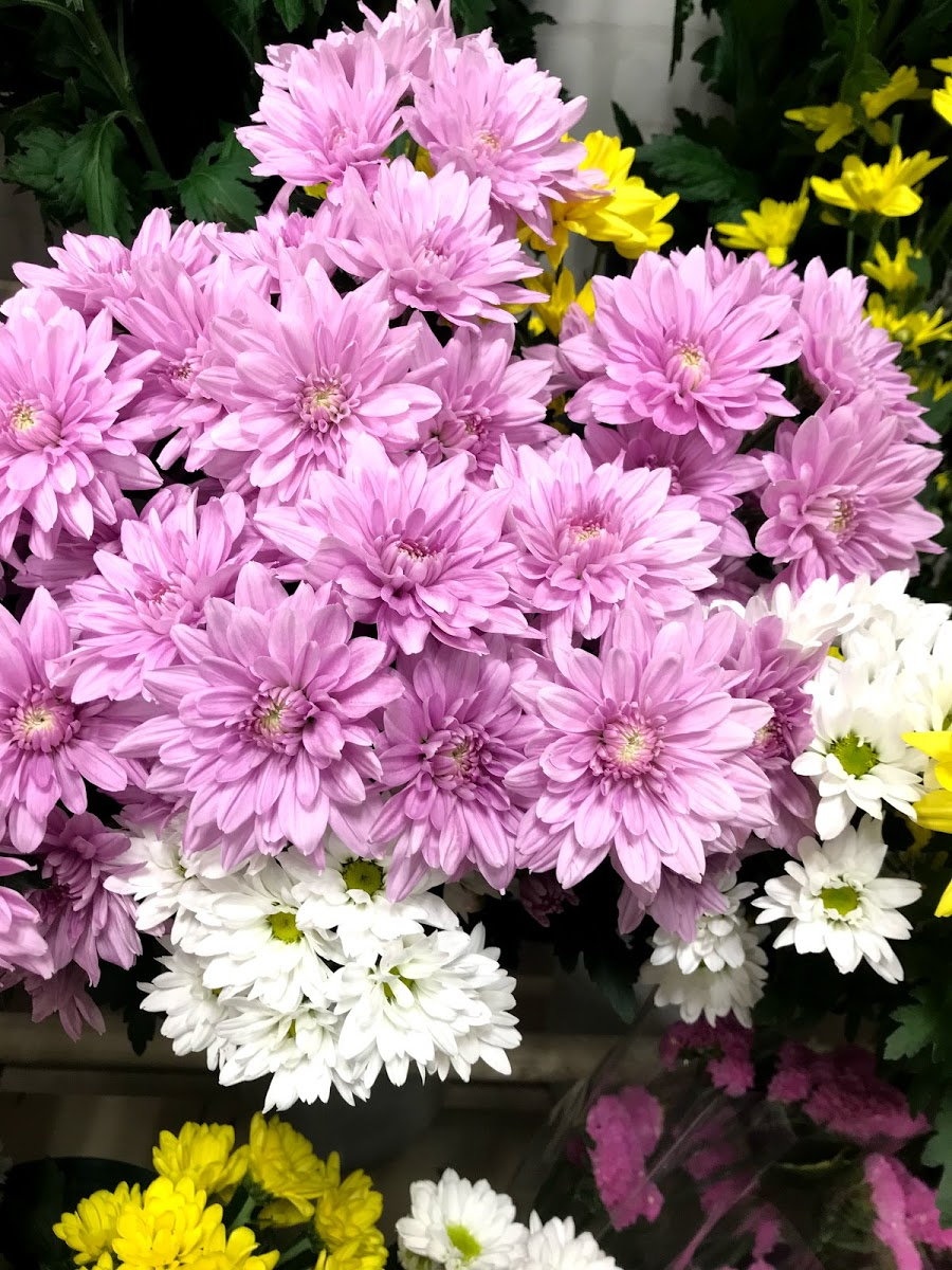 f:id:asunaro-flower:20200615022731j:plain