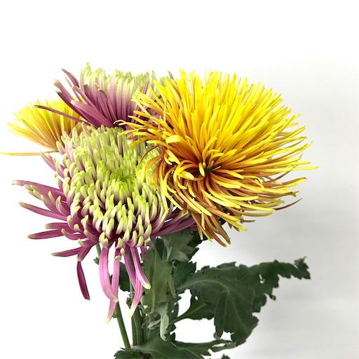 f:id:asunaro-flower:20200615022802j:plain