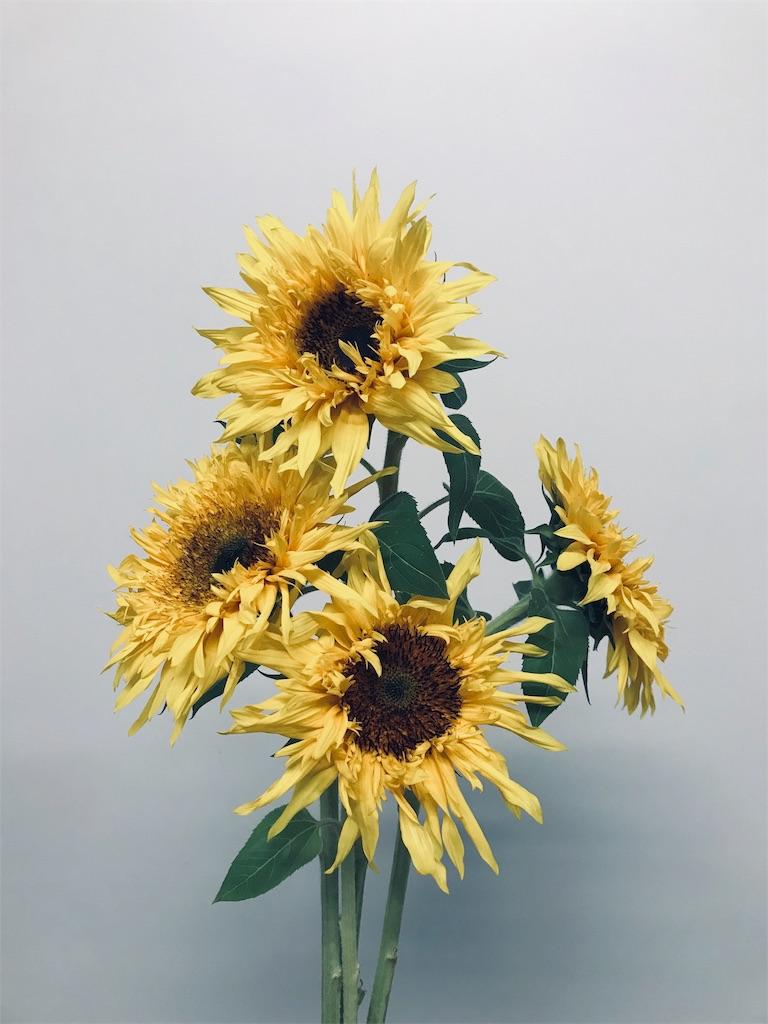 f:id:asunaro-flower:20200615023128j:plain
