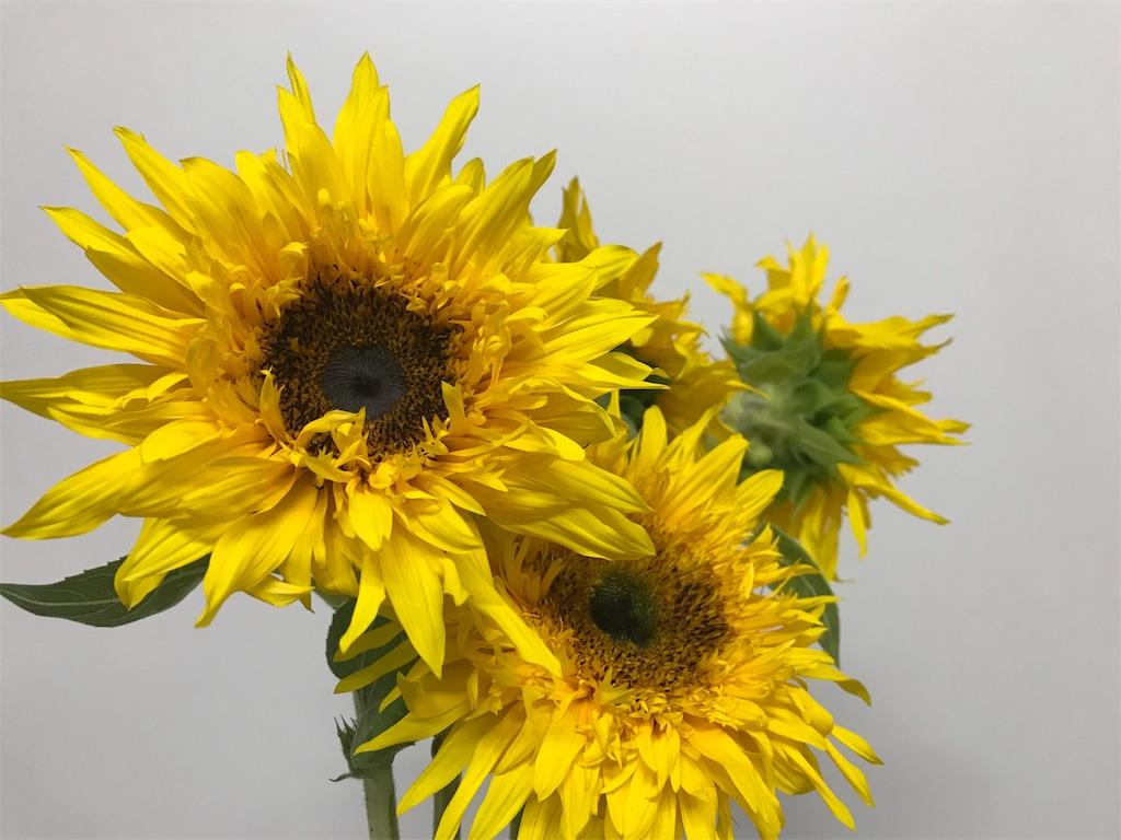 f:id:asunaro-flower:20200615023227j:plain