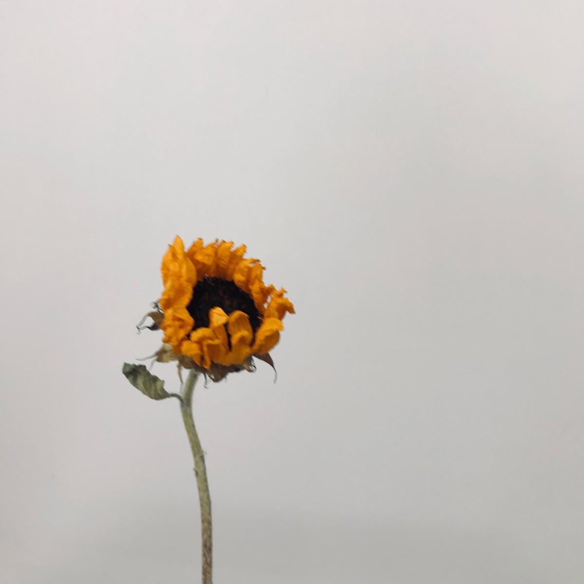 f:id:asunaro-flower:20200615023300j:plain