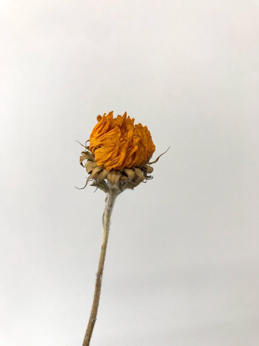 f:id:asunaro-flower:20200615023315j:plain