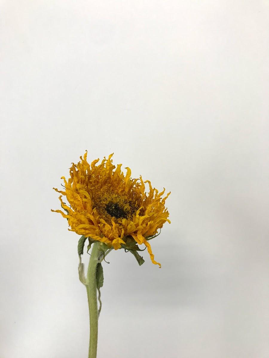 f:id:asunaro-flower:20200615023344j:plain