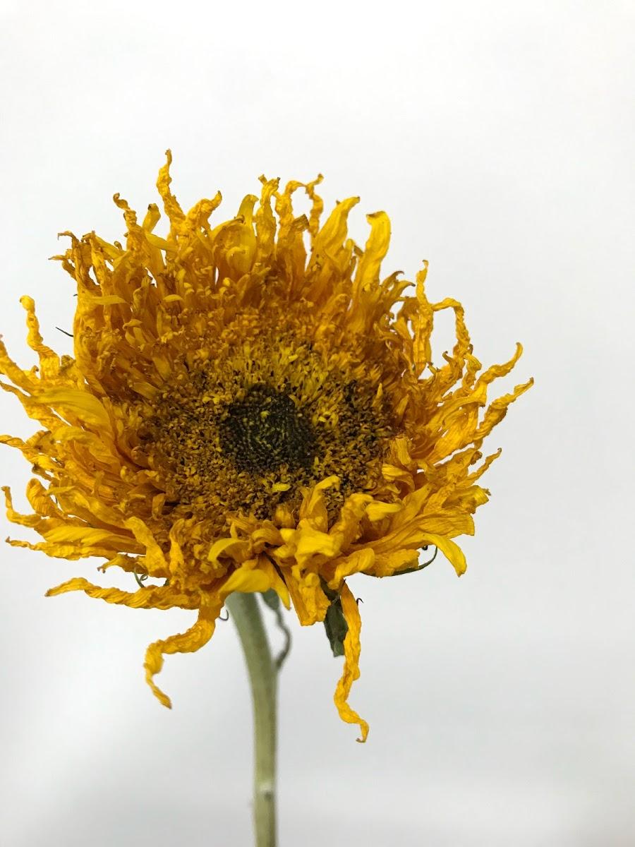 f:id:asunaro-flower:20200615023406j:plain
