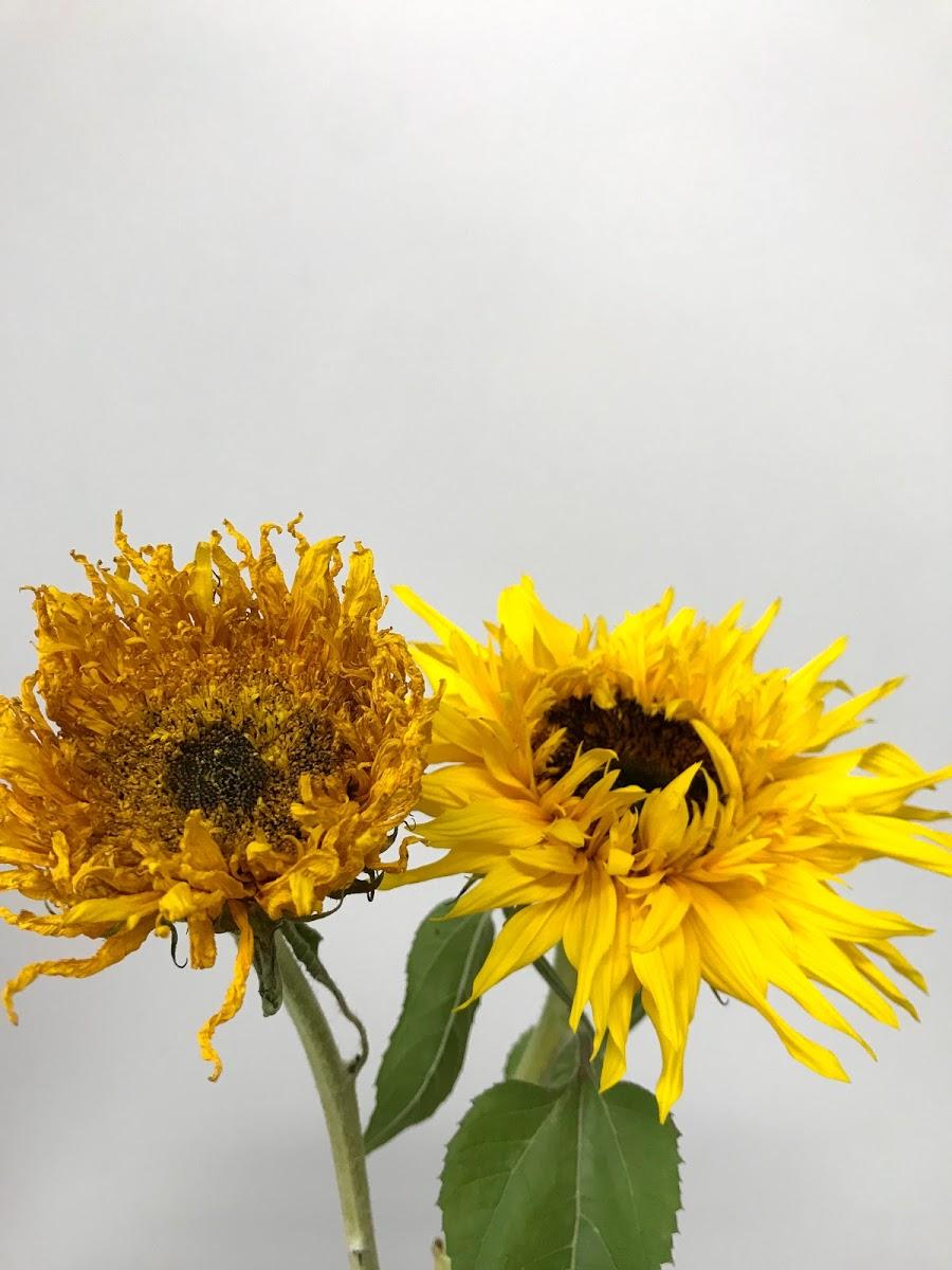 f:id:asunaro-flower:20200615023422j:plain