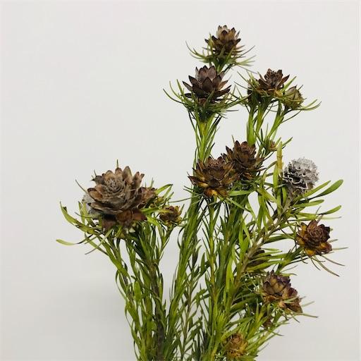 f:id:asunaro-flower:20200617015116j:image