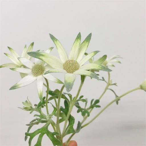 f:id:asunaro-flower:20200617015629j:image