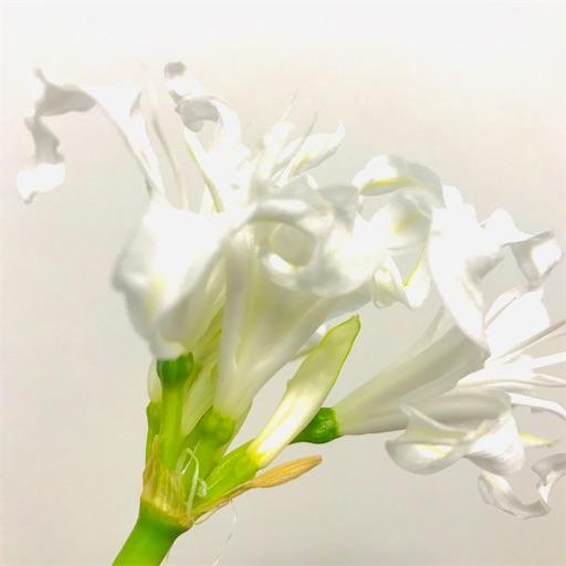 f:id:asunaro-flower:20200617020900j:image