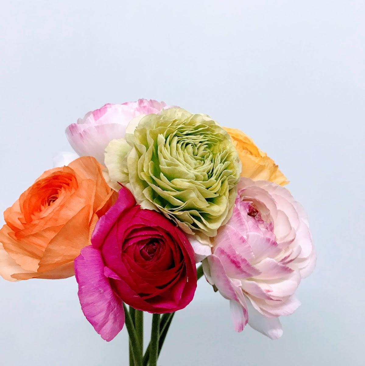 f:id:asunaro-flower:20200617034750j:plain