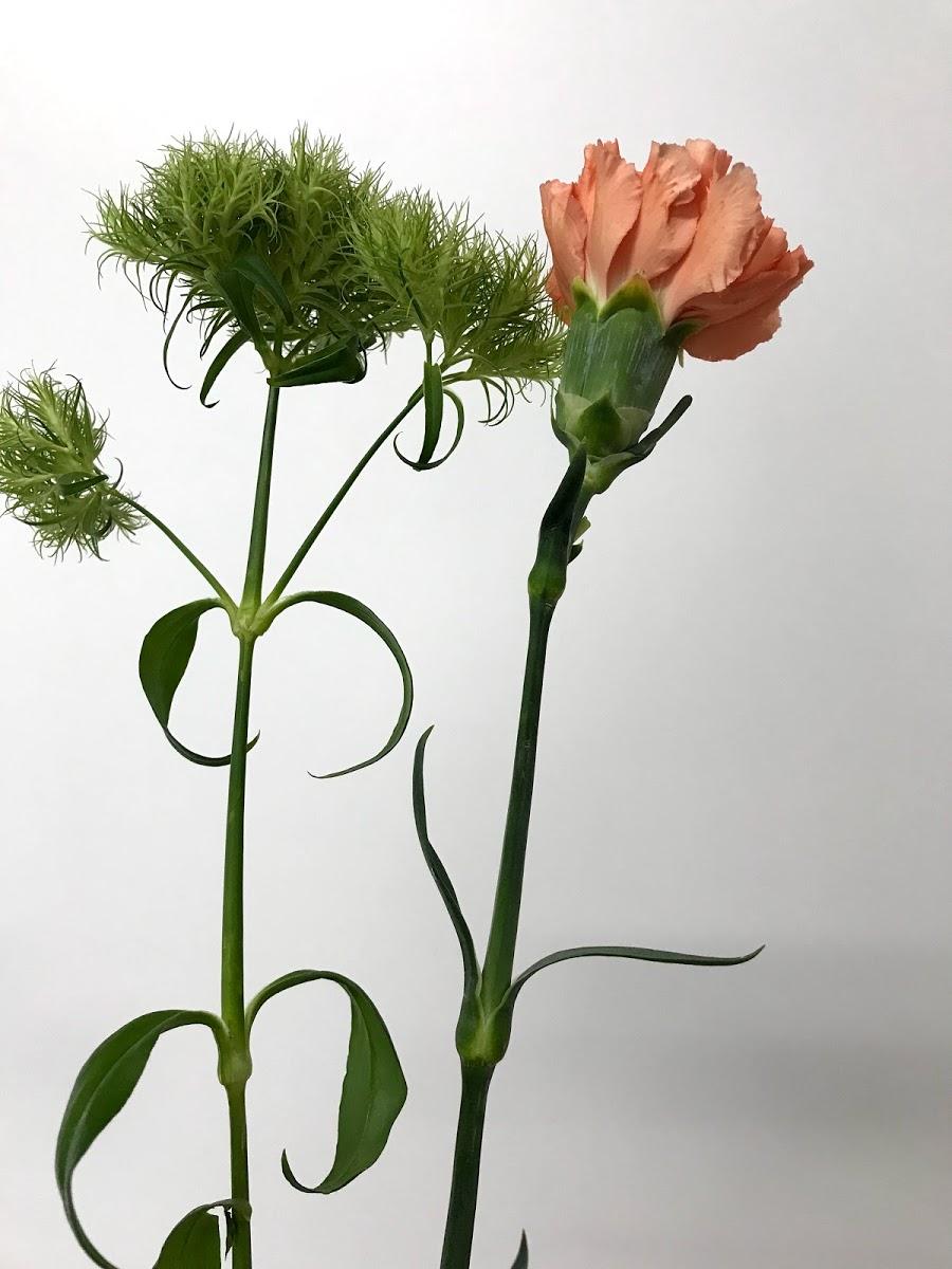 f:id:asunaro-flower:20200619015342j:plain