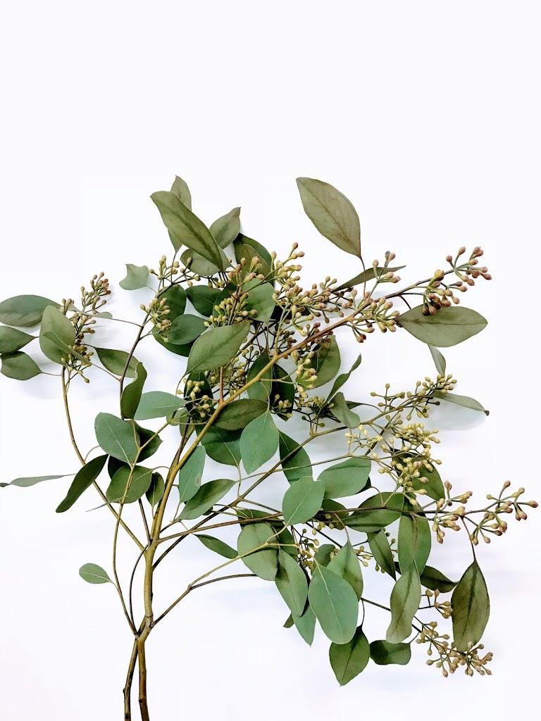 f:id:asunaro-flower:20200619020200j:plain