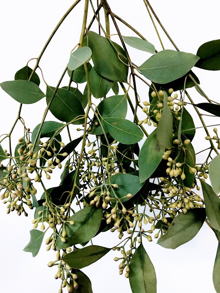 f:id:asunaro-flower:20200619020216j:plain