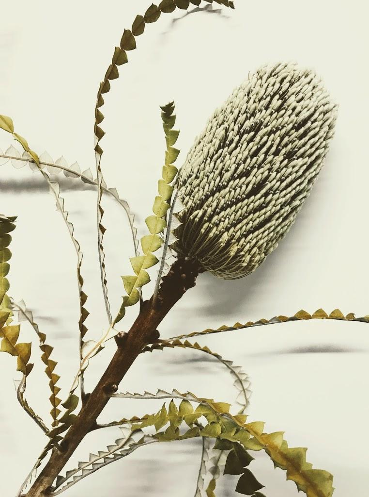 f:id:asunaro-flower:20200623003220j:plain