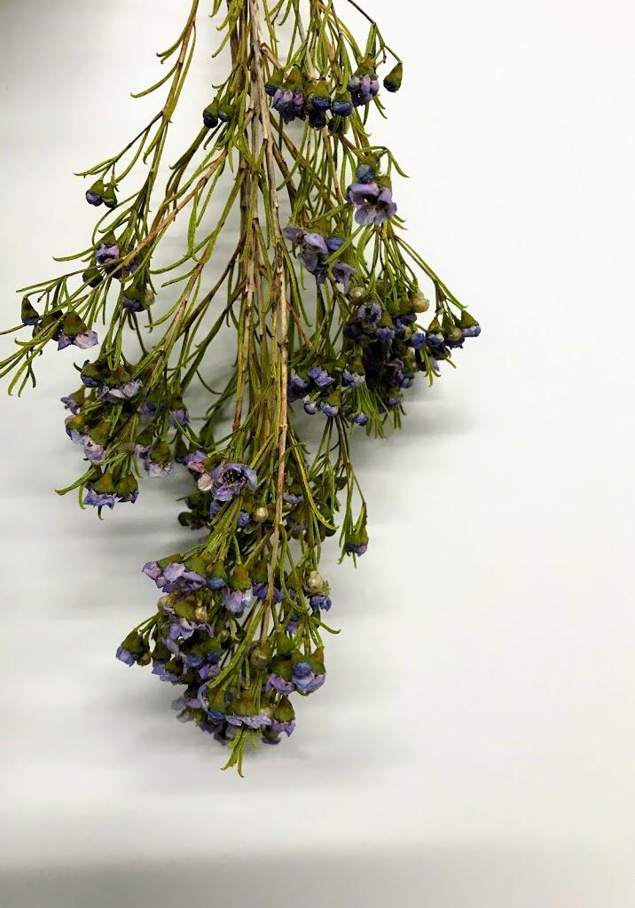 f:id:asunaro-flower:20200623005021j:plain