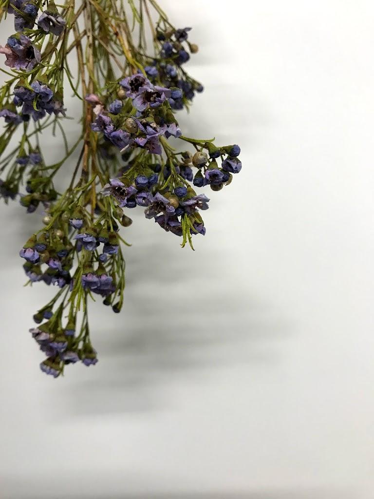 f:id:asunaro-flower:20200623005033j:plain