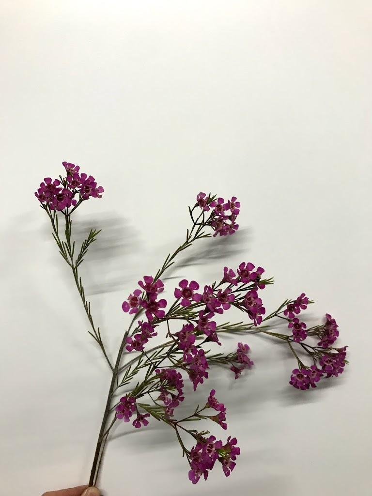 f:id:asunaro-flower:20200623005111j:plain