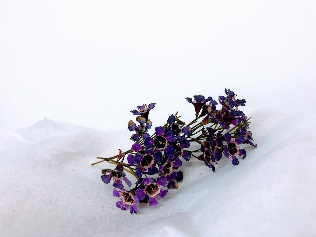 f:id:asunaro-flower:20200623005326j:plain