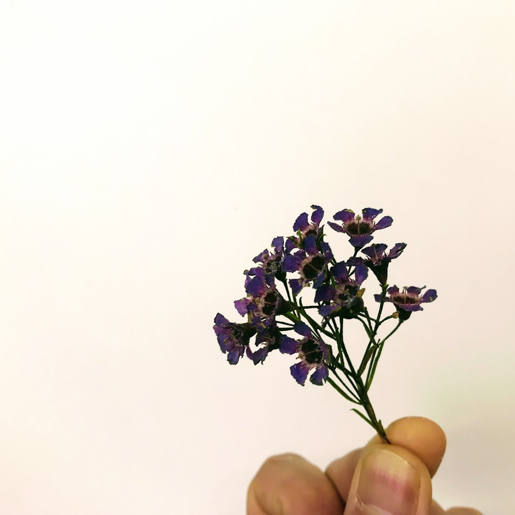 f:id:asunaro-flower:20200623005358j:plain