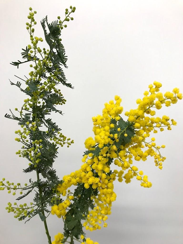 f:id:asunaro-flower:20200623010522j:plain