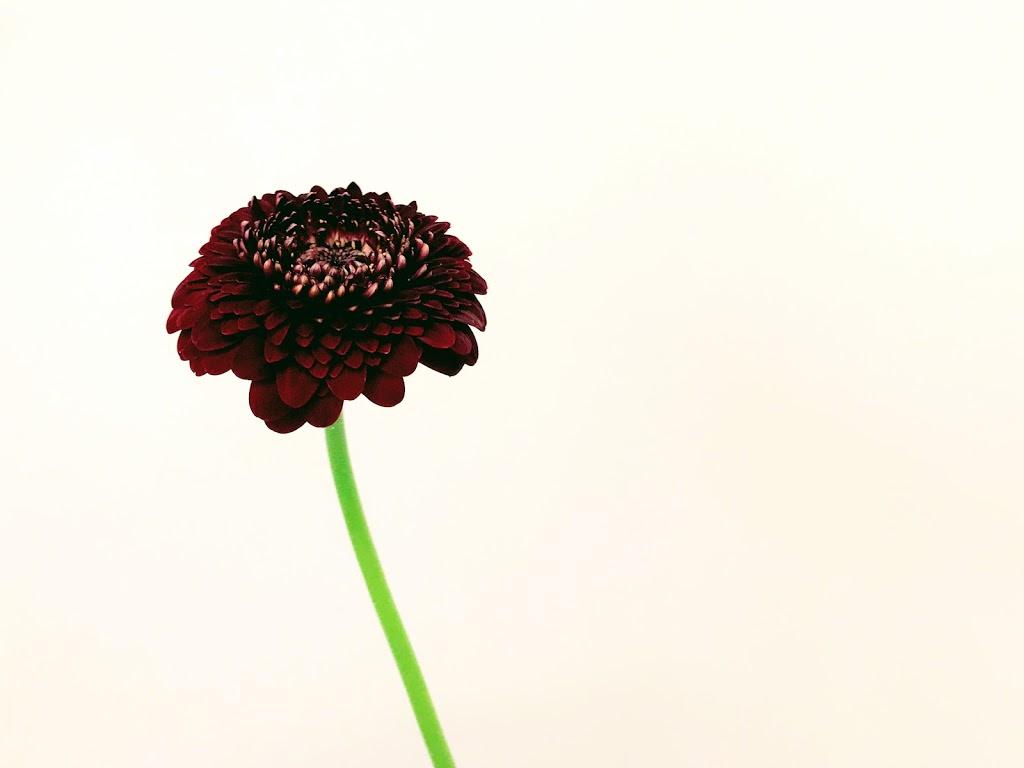 f:id:asunaro-flower:20200623010723j:plain