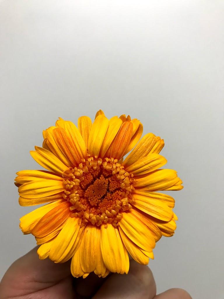 f:id:asunaro-flower:20200623010939j:plain