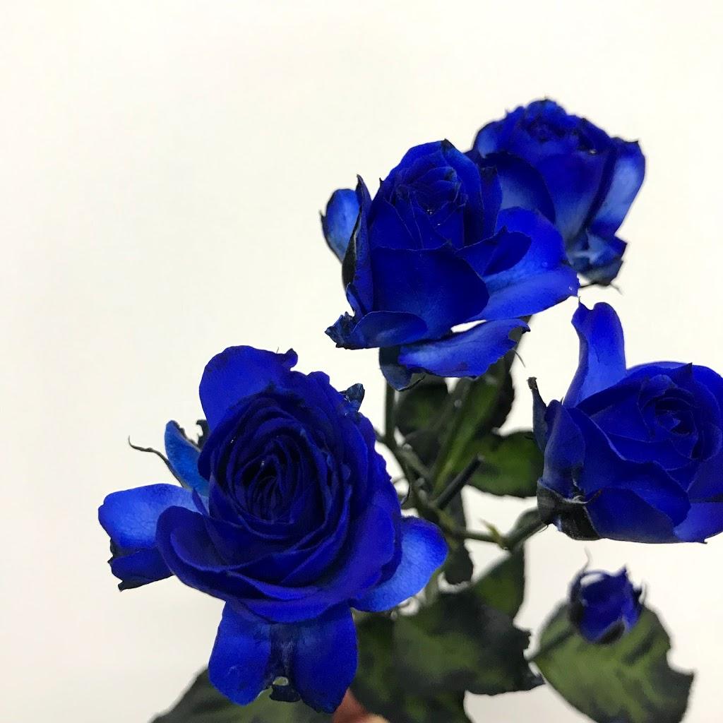 f:id:asunaro-flower:20200623011301j:plain